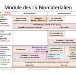 Module BioMat ab WS2020/2021 Teil 2